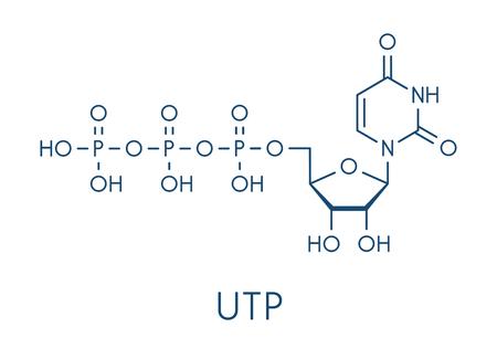 Uridine triphosphate (UTP) nucleotide molecule. Building block of RNA. Skeletal formula. Illustration