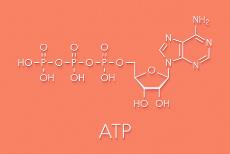 Adenosine triphosphate (ATP) molecule. Functions as neurotransmitter, RNA building block, energy transfer molecule, etc Skeletal formula.
