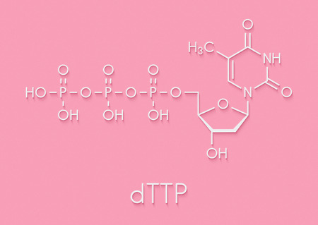 Thymidine triphosphate (TTP) nucleotide molecule. DNA building block. Skeletal formula.
