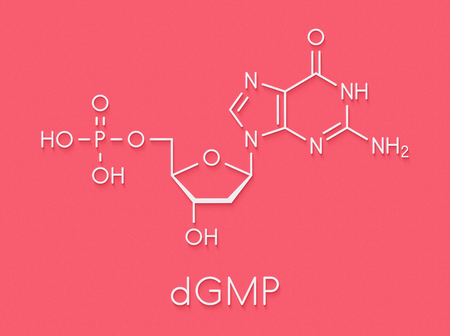 Deoxyguanosine monophosphate (dGMP) nucleotide molecule. DNA building block. Skeletal formula.