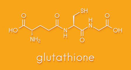 글루타티온 (글루타티온 환원, GSH) 내인성 항산화 물질. 골격 공식. 스톡 콘텐츠