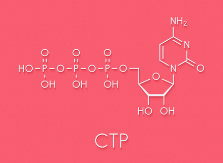 Cytidine triphosphate (CTP) RNA building block molecule. Also functions as cofactor to some enzymes. Skeletal formula.
