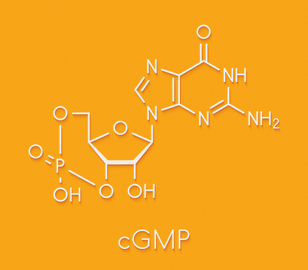 Cyclic guanosine monophosphate (cGMP) molecule. Important second messenger, produced by guanylate cyclase, broken down by phosphodiesterase (PDE). Skeletal formula. Stock Photo