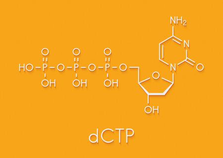 Deoxycytidine triphosphate (dCTP) nucleotide molecule. DNA building block. Skeletal formula.