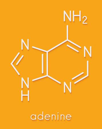 Adenine (A, Adenine) purine nucleobase molecule. Base present in DNA and RNA. Skeletal formula. Stock Photo