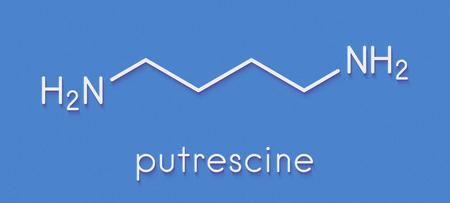 Putrescine foul smelling molecule. Skeletal formula.