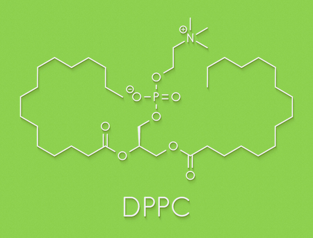 Pulmonary surfactant molecule. Chemical structure of dipalmitoylphosphatidylcholine (DPPC) the major constituent of lung surfactant. Skeletal formula. Stock Photo