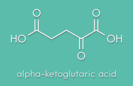 Alpha-ketoglutaric acid (ketoglutarate, oxo-glutarate). Intermediate molecule in the Krebs cycle. Found to prolong lifespan (in nematodes). Skeletal formula. Stock Photo