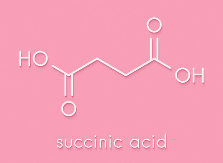 Succinic acid (butanedioic acid, spirit of amber) molecule. Intermediate of citric acid cycle. Salts and esters known as succinates. Skeletal formula.