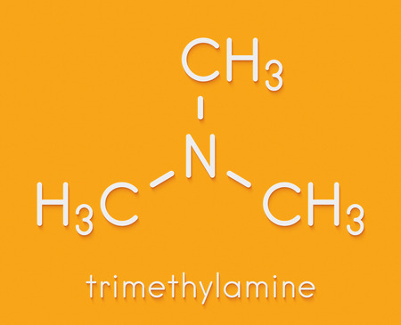 Trimethylamine volatile tertiary amine molecule. Important component of the smell of (rotting) fish. Skeletal formula.