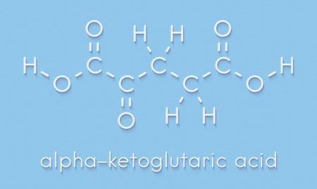 Alpha-ketoglutaric acid (ketoglutarate, oxo-glutarate). Intermediate molecule in the Krebs cycle. Found to prolong lifespan (in nematodes). Skeletal formula. Stock Photo