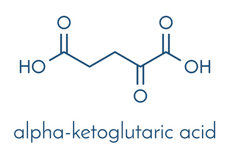 Alpha-ketoglutaric acid (ketoglutarate, oxo-glutarate). Intermediate molecule in the Krebs cycle. Found to prolong lifespan (in nematodes). Skeletal formula. Illustration