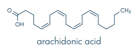 Molécula de ácido araquidônico. Ácido graxo ômega-6 poliinsaturado que é um precursor de prostaglandinas, prostaciclina, tromboxanos, leucotrienos e anandamida. Fórmula esquelética.