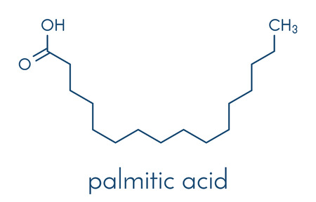 Palmitic (hexadecanoic) acid saturated fatty acid molecule. Çizim