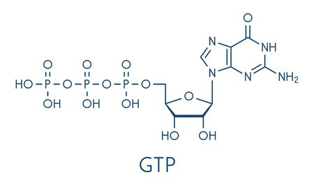 Guanosine triphosphate (GTP) RNA building block molecule. Also used as energy transport molecule and in signal transduction. Skeletal formula.