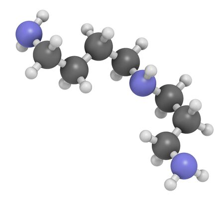 Spermidine molecule. 3D rendering. Atoms are represented as spheres with conventional color coding: hydrogen (white), carbon (grey), nitrogen (blue).