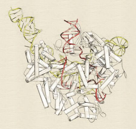 CRISPR - CAS9 gene editing complex from Streptococcus pyogenes. The Cas9 nuclease protein uses a guide RNA sequence to cut DNA at a complementary site. Zdjęcie Seryjne