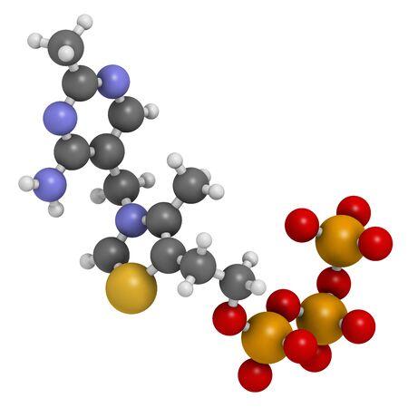 Molécule de triphosphate de thiamine. rendu 3D. Les atomes sont représentés comme des sphères classiques avec codage couleur : l'hydrogène (blanc), le carbone (gris), l'oxygène (rouge), l'azote (bleu), le soufre (jaune), le phosphore (orange).