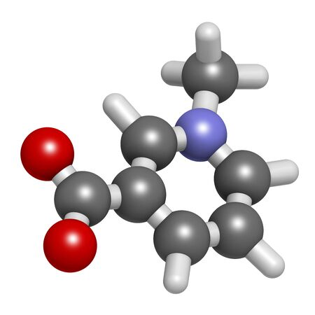 Trigonelline molecule. Metabolite of niacin (vitamin B3) but also found in a number of plants, including fenugreek. 3D rendering. Atoms are represented as spheres with conventional color coding: hydrogen (white), carbon (grey), oxygen (red), nitrogen (blue).