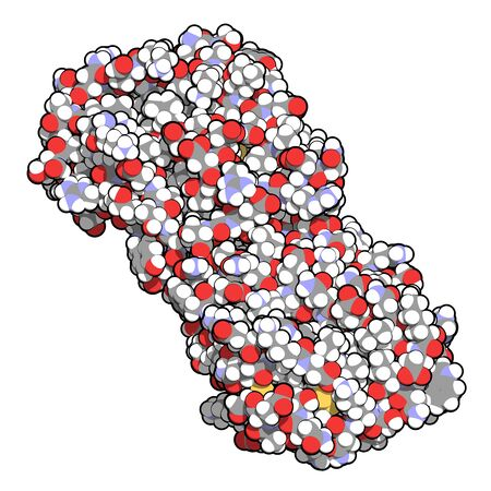 Colony stimulating factor 1 (CSF-1, M-CSF). Also known as macrophage colony stimulating factor. 3D rendering. Atoms are represented as spheres with conventional color coding.