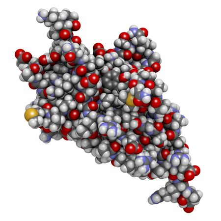 Programmed cell death 1 (PD-1, CD279) receptor protein. PD-1 is a major cancer drug target. 3D rendering. Atoms are represented as spheres with conventional color coding.