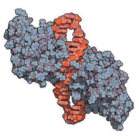 NF-kB (nuclear factor kappa-light-chain-enhancer of activated B cells) protein complex. Plays a role in cancer and inflammation. 3D rendering, atoms are represented as color-coded spheres.