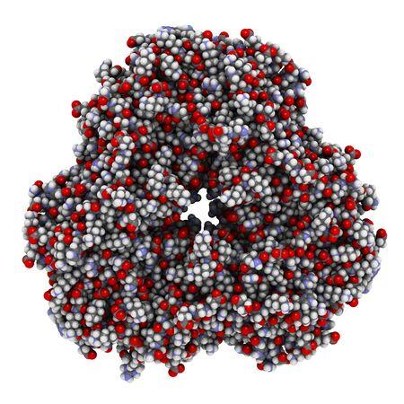Peanut allergen Ara h1. Main allergen from peanut (Arachis hypogaea). 3D rendering, atoms are represented as spheres with conventional color coding.