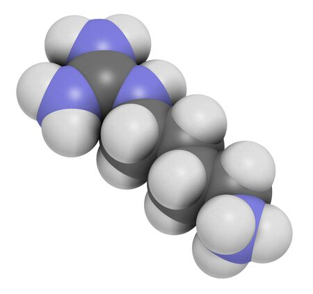 Agmatine molecule. 3D rendering. Atoms are represented as spheres with conventional color coding: hydrogen (white), carbon (grey), nitrogen (blue).