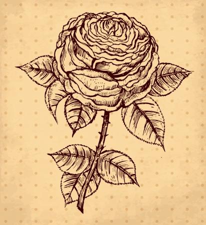 rose silhouette: hand drawn vintage illustration with rose Illustration