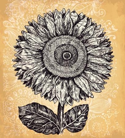 sunflower drawing: Hand drawn sunflower