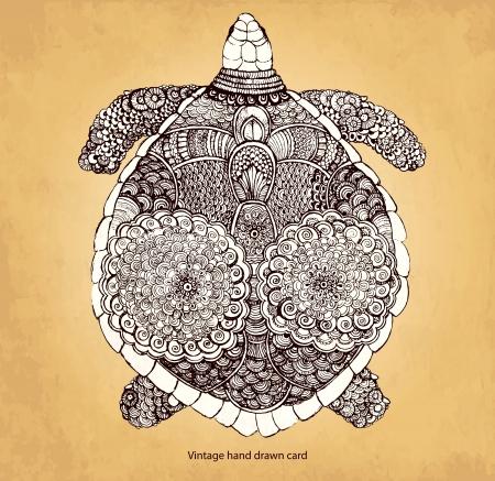 Kézzel rajzolt teknős Illusztráció