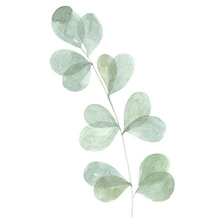 Watercolor botanical Standard-Bild - 121749400