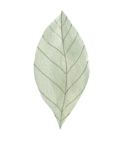Watercolor botanical Standard-Bild - 121749406