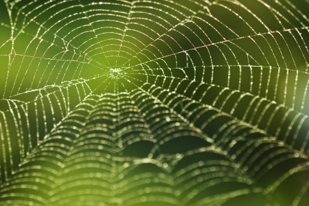 Shining water drops on spiderweb over green forest  photo