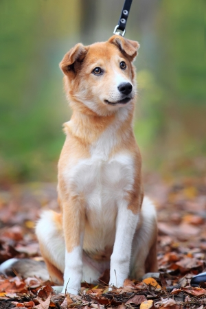 Beautiful outdoor portrait of a young dog with honey eyes photo
