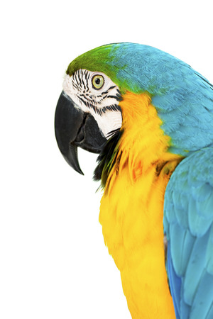 colorful parrots head closeup shot isolated on white photo