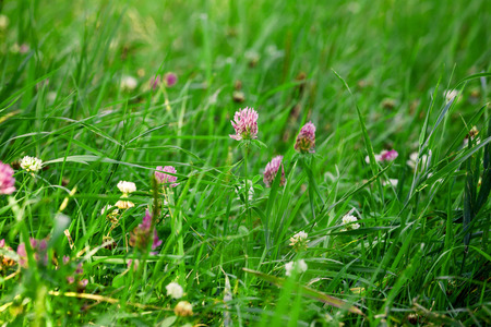 Green grass with small flowers photo