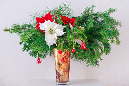 Brunch Fir Tree with young cone and poinsettia in vase photo
