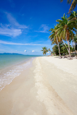 turquoise water: Beautiful tropical beach with palm trees, white sand, turquoise ocean water and blue sky at Koh Samui, Thailand Stock Photo