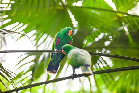 가지에 앉아서 음식을 가지고 노는 두 개의 녹색 앵무새 스톡 콘텐츠 - 104934602