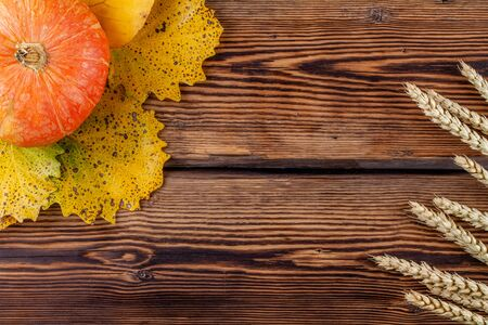 Top view of pumpkin and rye ears on wooden background. Copy space autumn concept