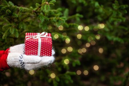 Hands in knitted mittens holding a Christmas gift box. Fir-tree bokeh background