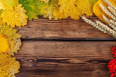Leaves, wheat ears and rowan on wooden background. Copy space. Autumn concept