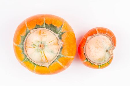 Pair of trendy ugly organic farm double mutation pumpkins on white background. Concept non-waste production in food industry and a world without starvation. Top view.