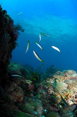 ambiente: ambiente school-fish Stock Photo