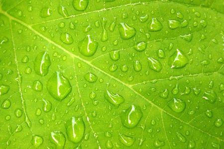 kropla deszczu: Woda spada na liści