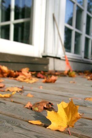 Colorful autumn maple leaves on backyard patio Фото со стока