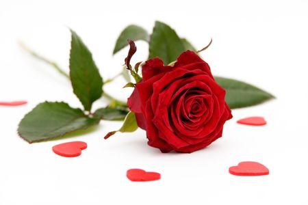 Red rose and little hearts on white background Stock Photo - 928625