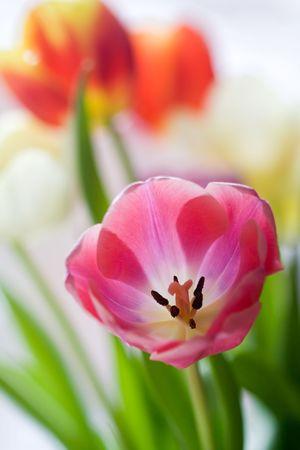 Bouquet de tulipes colorées Banque d'images - 931418