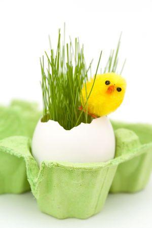 tojáshéj: Easter grass growing in egg shell
